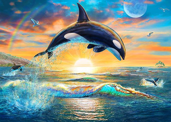 Dolphins ☆ Whales