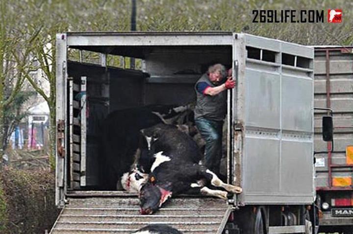 Gegen Tierquälerei Facebook