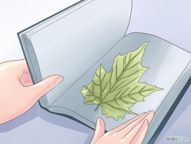 Image titled Dry Leaves Step 23