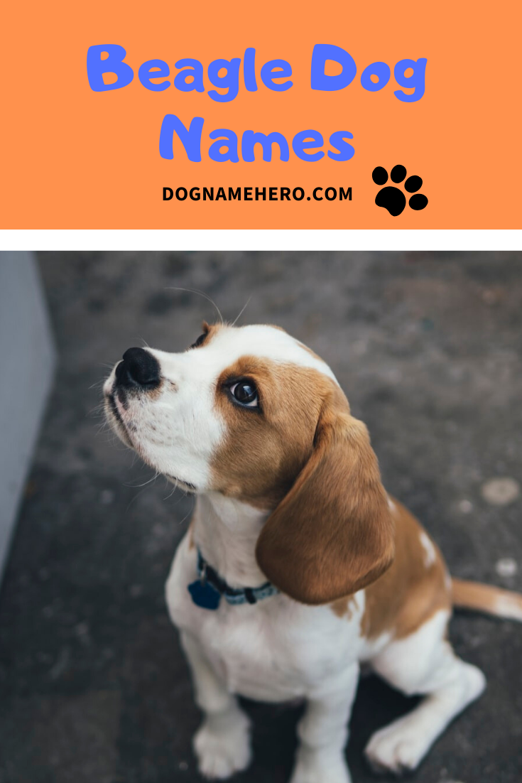 Beagle Names 100 Names For Beagle Puppy In 2020 Dog Names