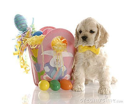 Easter Cocker Spaniel American Cocker Spaniel Puppy Sitting Beside Basket Full Of Easter Spaniel Dog Puppy Wallpaper Cocker Spaniel Puppies
