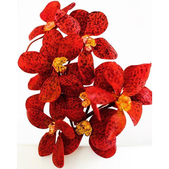 Orchids | Maggie_Austin #maggieaustincakes
