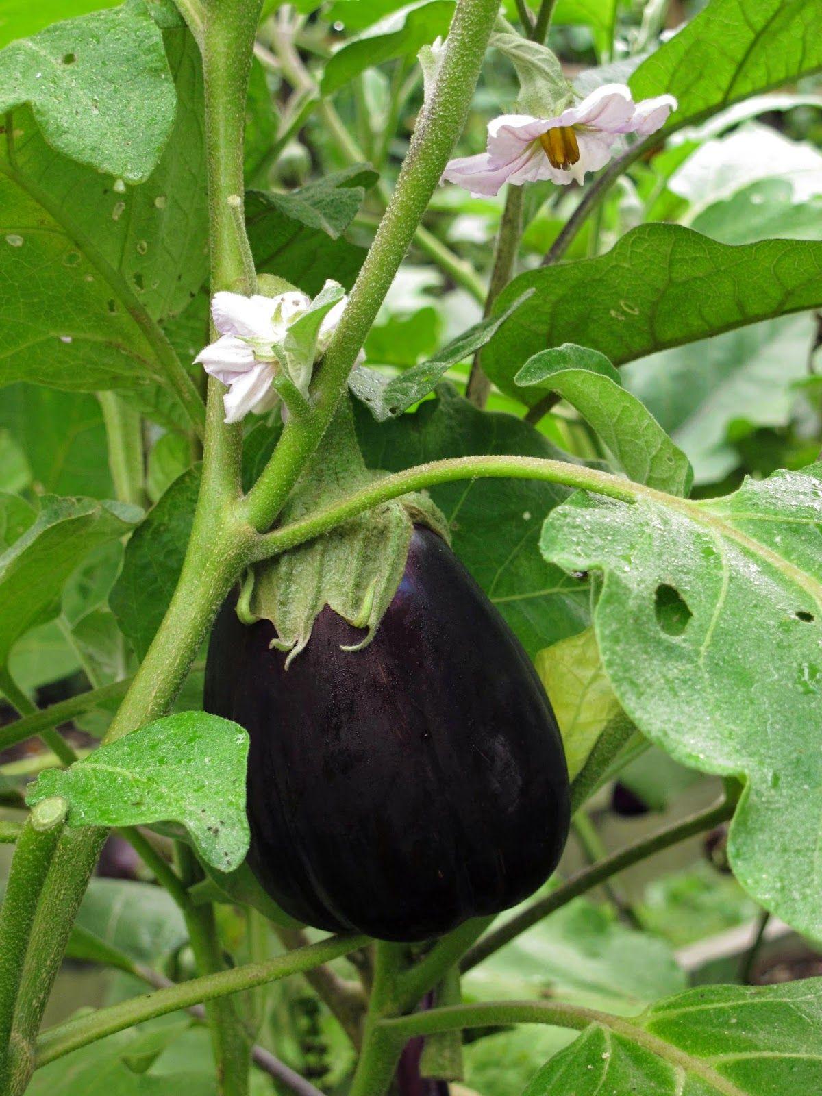 En el jardin: Huerta