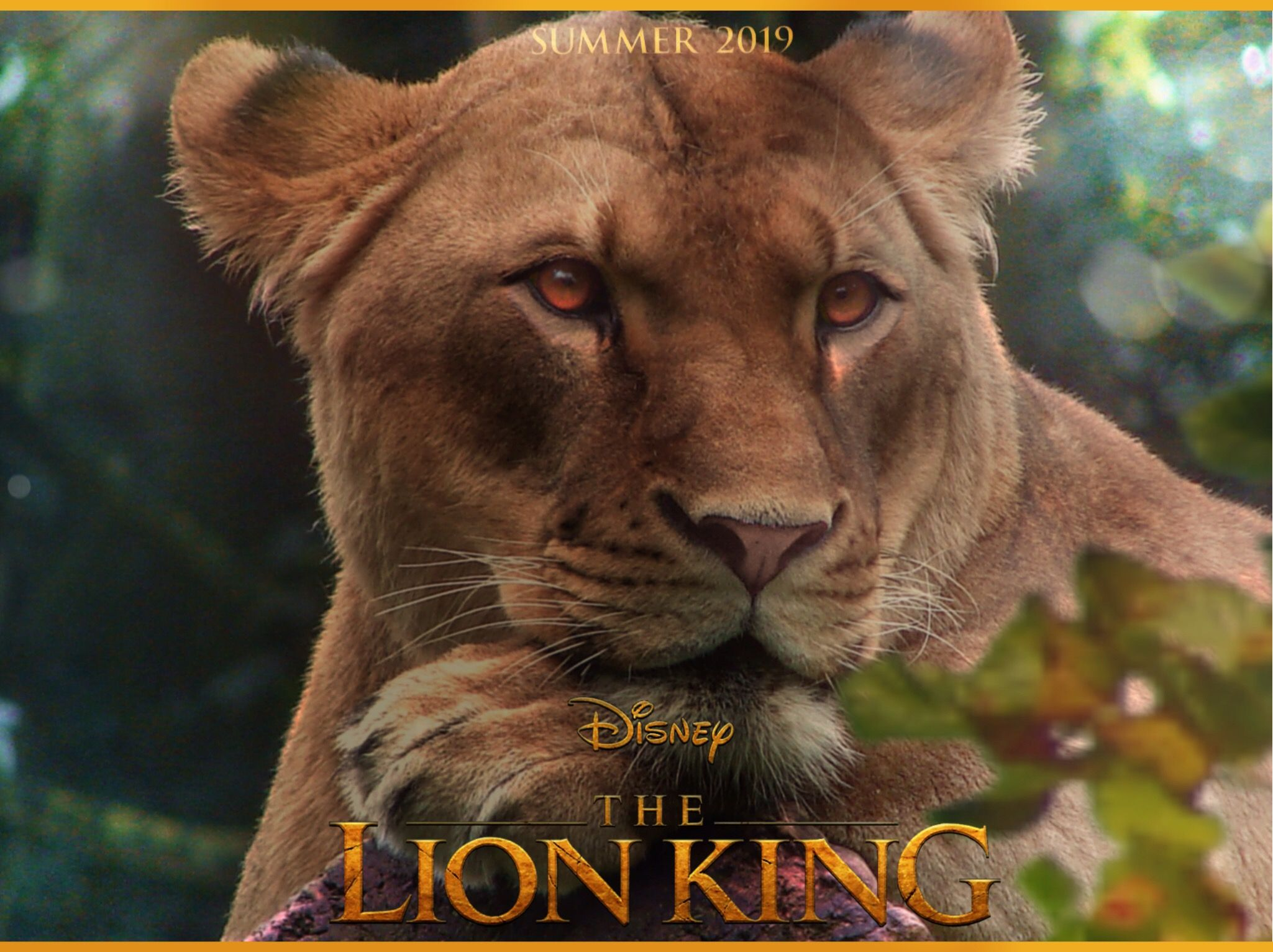 Lion King 2019 Lion King Live Action 2019 The Lion Kard