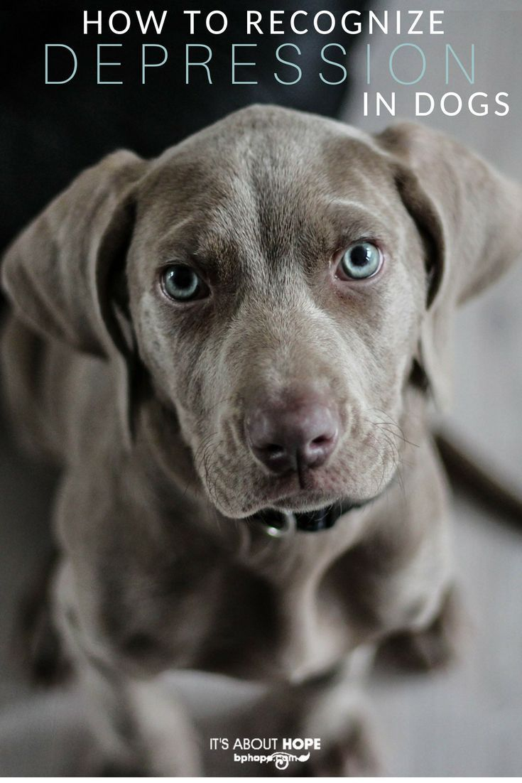 Can our dogs get depressed like us pets pinterest dogs pets