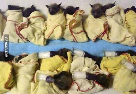 Bats being treated for heat stress in Australia.