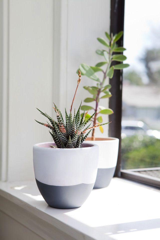 Diseo plantas de interior t macetas cemento y - Macetas interior ...