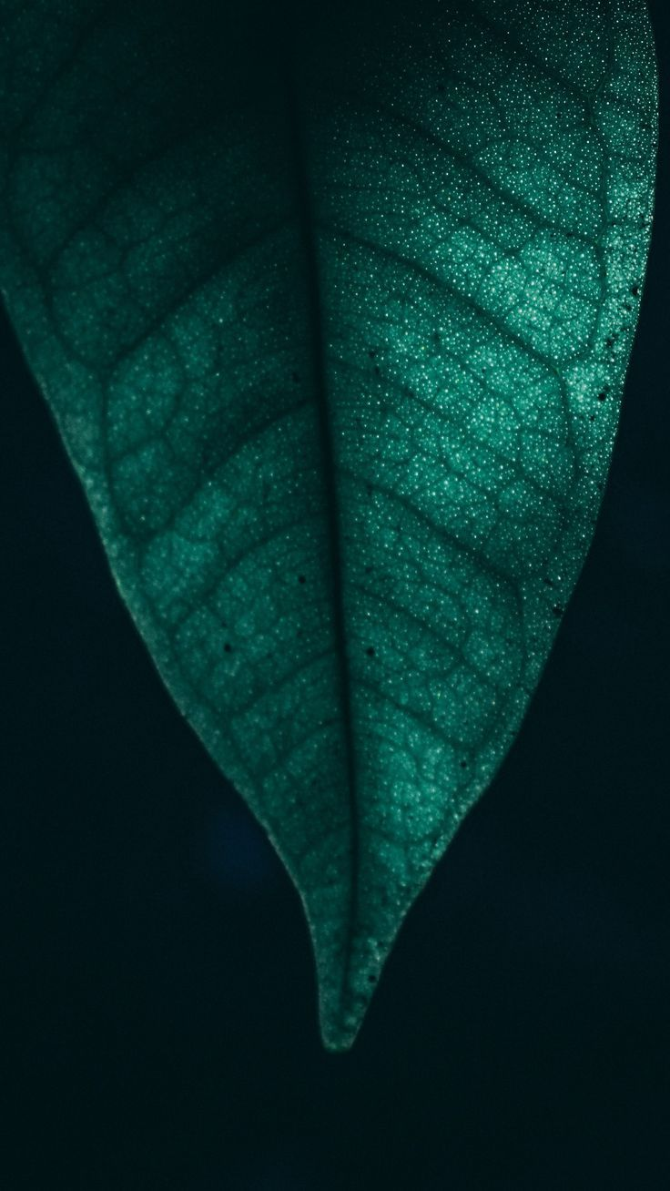 Nature Green Leaf Macro 4k Wallpapers Hd 4k Background For Android 4k Android Background Gr Android Wallpaper 4k Background Backgrounds For Android
