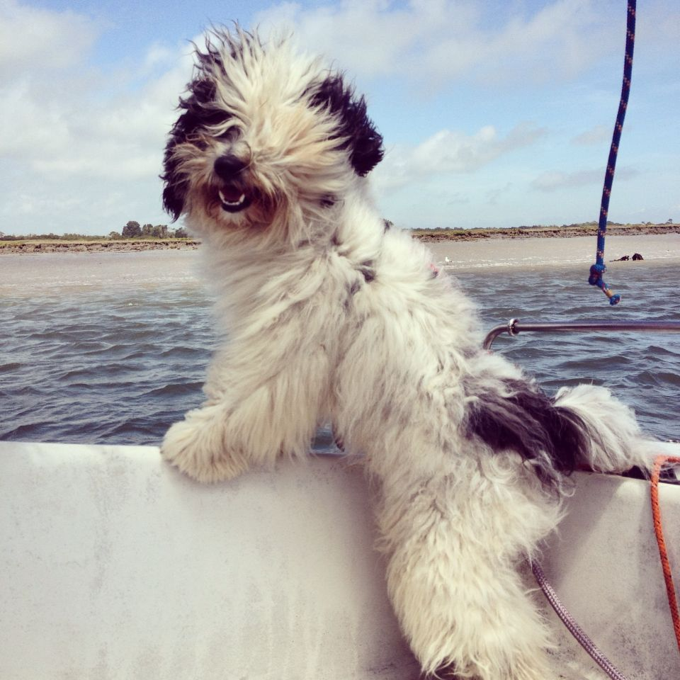 Happy Charlie The Excitement Of Seeing Land Tibetan Terrier Tibetan Terrier Dog Cat Dogs