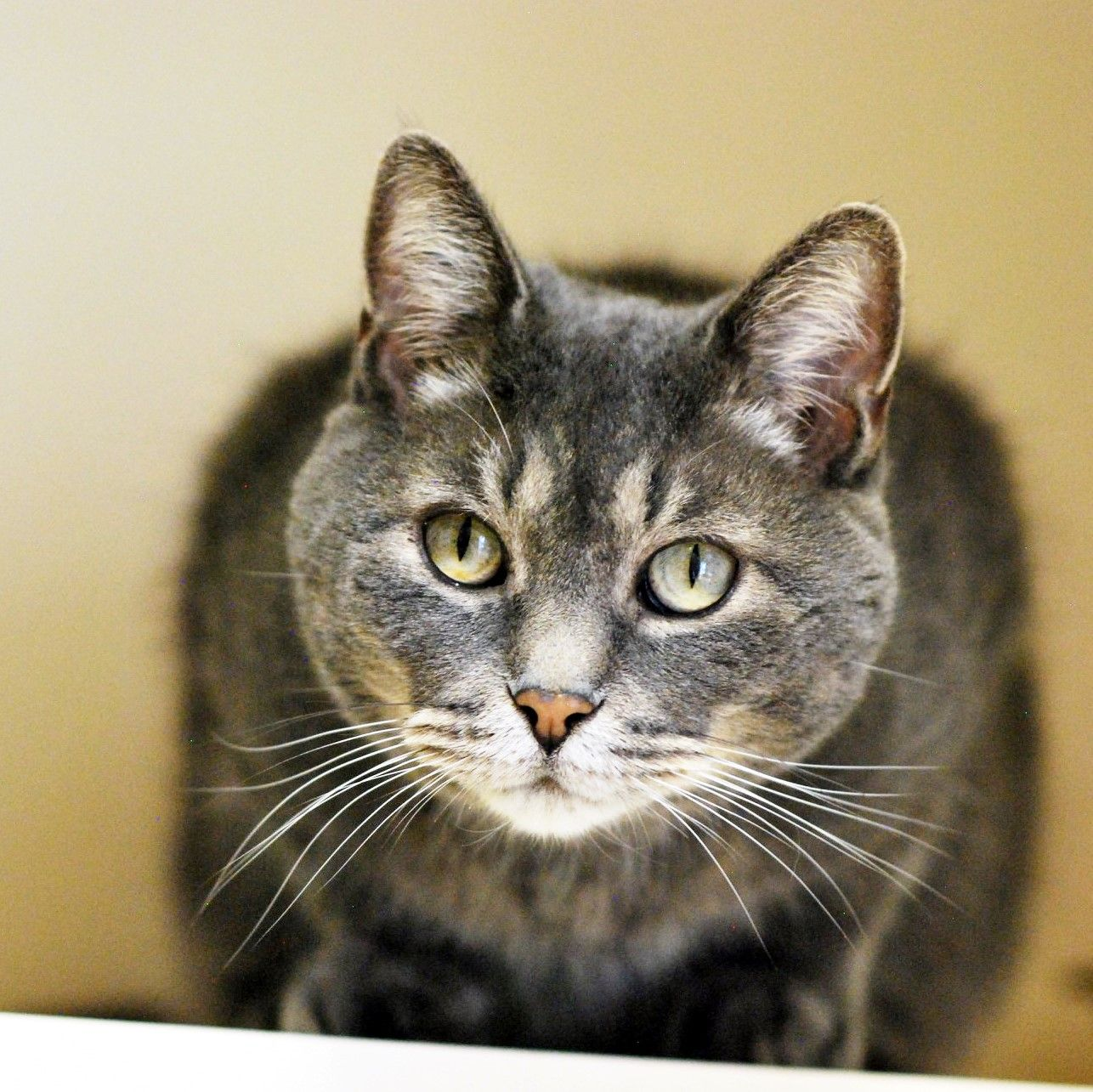 Amstel Pawsitive Match Rescue Foundation Calgary Based Dog And Cat Rescue Cat Adoption Frontline Plus For Cats Cute Cats And Kittens