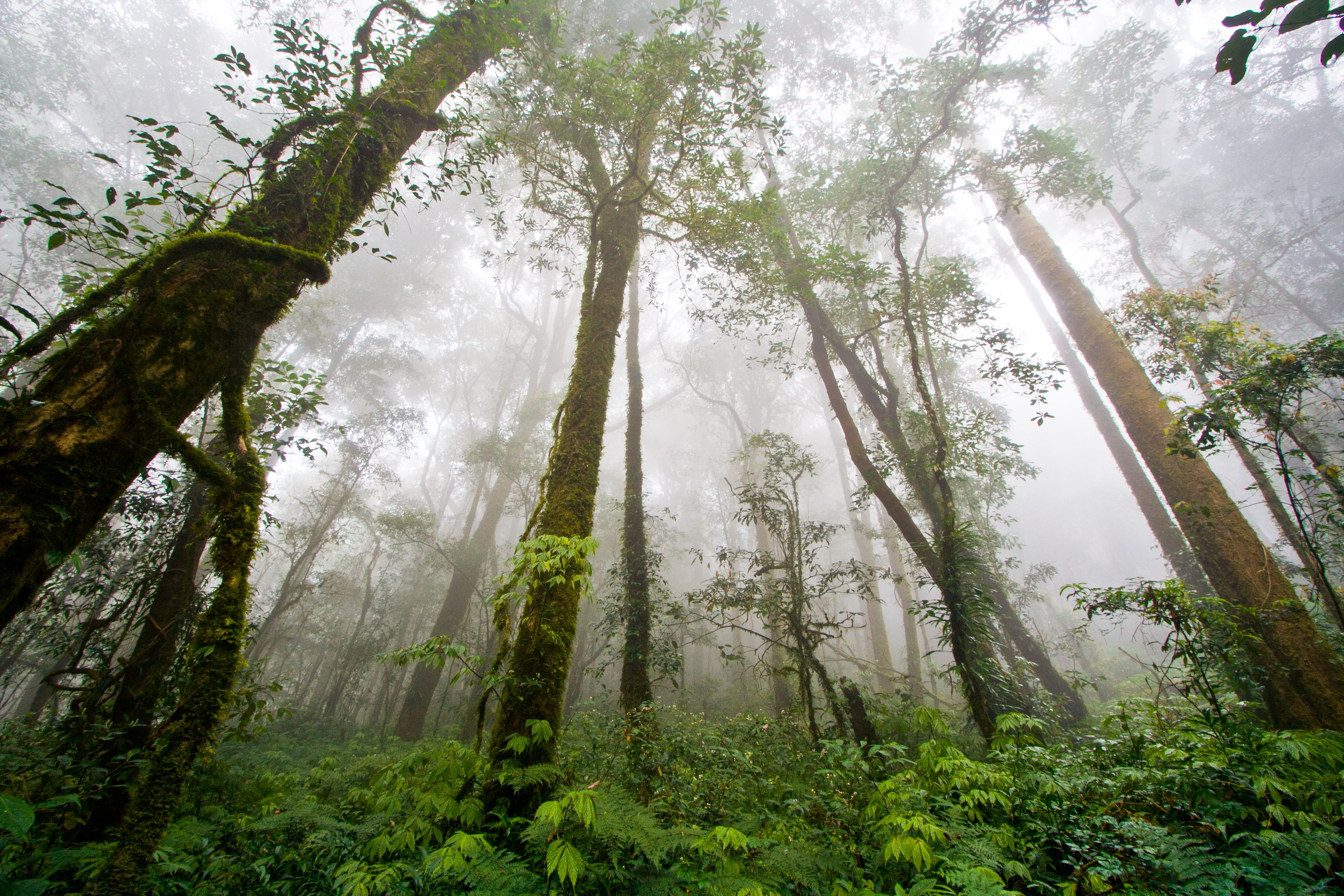 what is the terrain like in the amazon rainforest