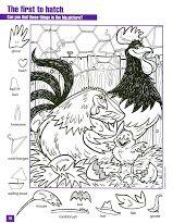 Zoekplaat kippen voor kleuters