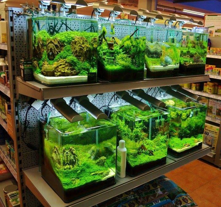 Planted Aquarium Aquarium Fish Tank Fresh Water Fish Tank Aquarium Fish