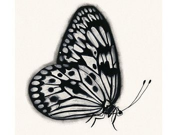 Butterfly Art Drawing Orange And Lilac Butterflies 83 X 117 Print