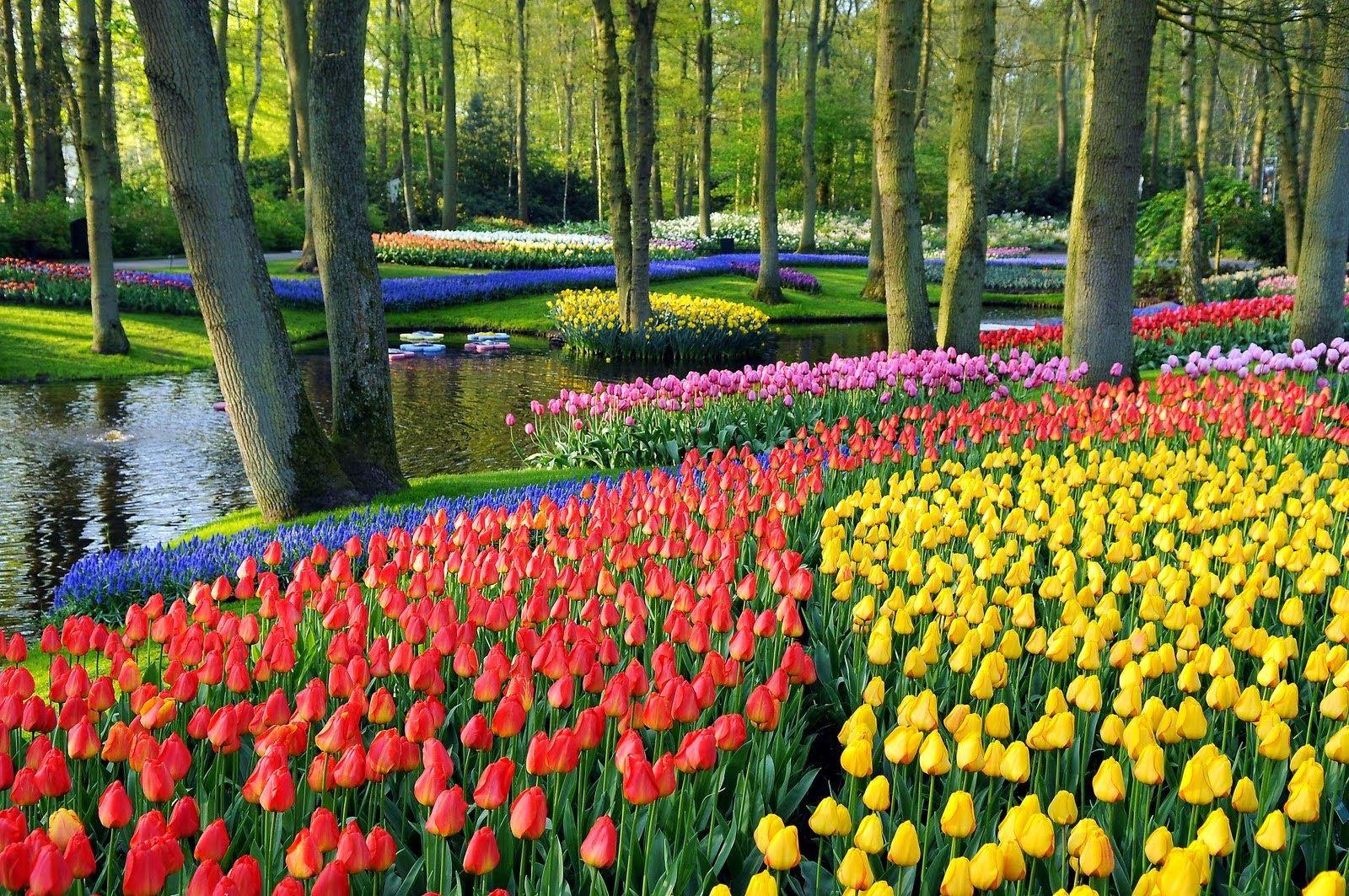 Beautiful keukenhof gardens with river tulips pinterest rivers beautiful keukenhof gardens with river izmirmasajfo