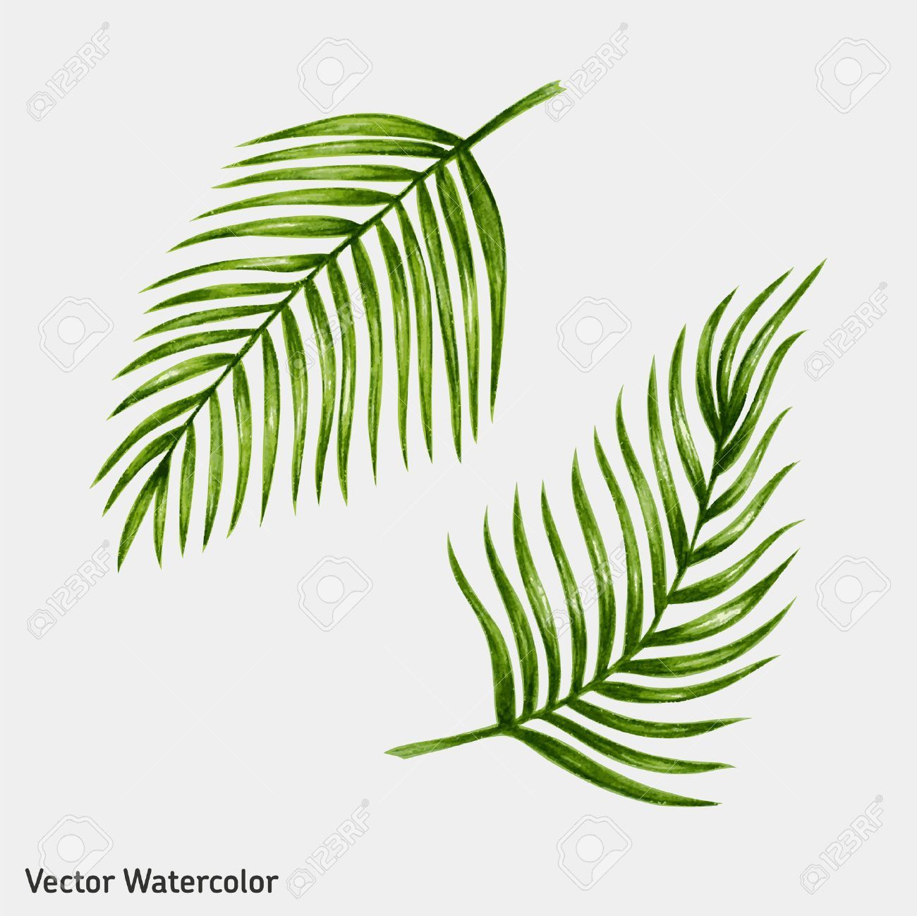 Watercolor Tropical Palm Leaves Vector Illustration Ad Palm