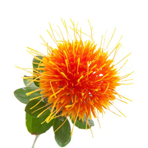 Function Of Carthamus Tinctorius Safflower Seed Oil Safflower Natural Vitamin C Makeup Remover Face Wash