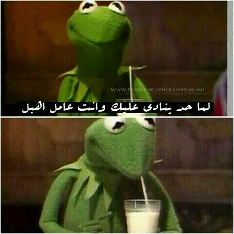 مهو انت اهبل اهبل من غير ما تعمل Funny Jokes Arabic Jokes