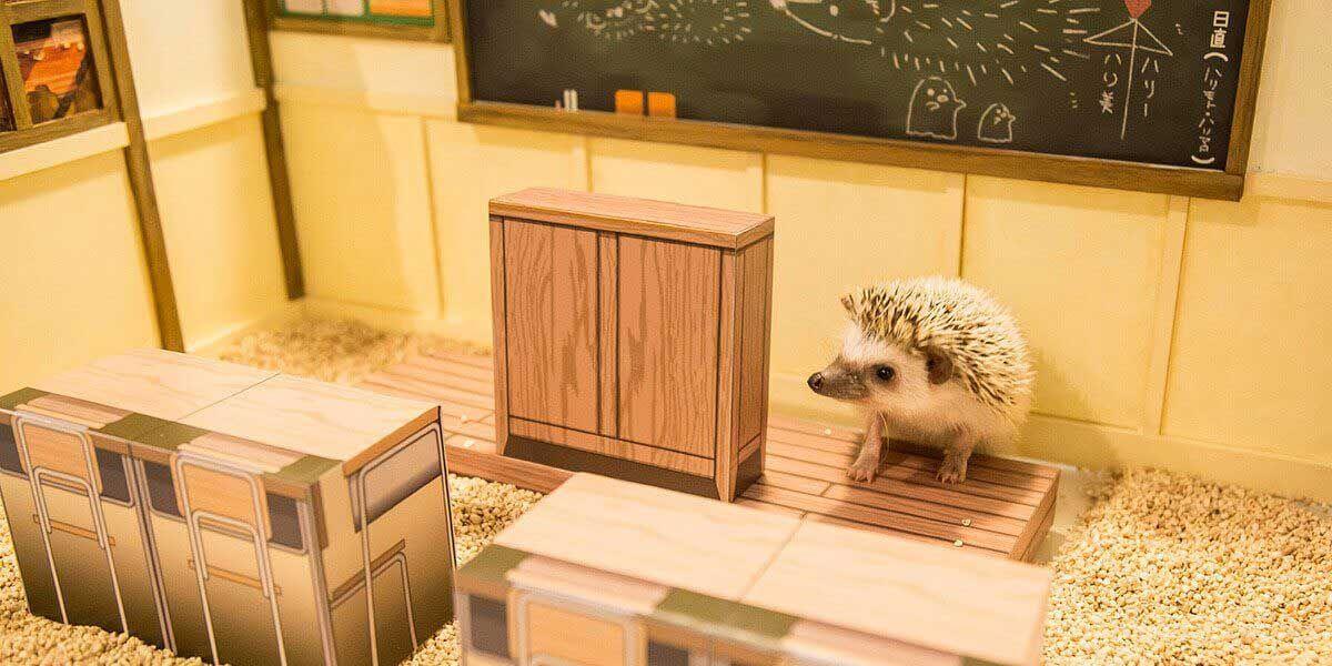 ハリネズミ専門カフェ ちくちくcafe 東京 渋谷 ハリネズミの家 カフェ 和室