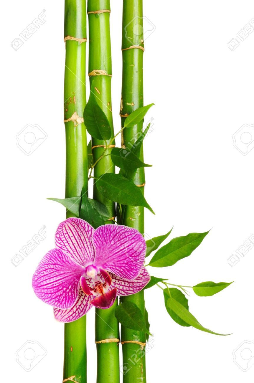 Bamboo Frame And Orchid On The White Background Bamboo Frame Bamboo Background Orchids