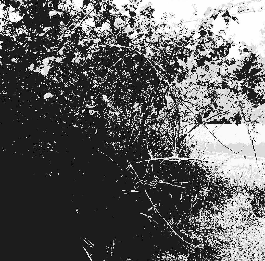 Vine Fields Black And White Photography-based Abstract