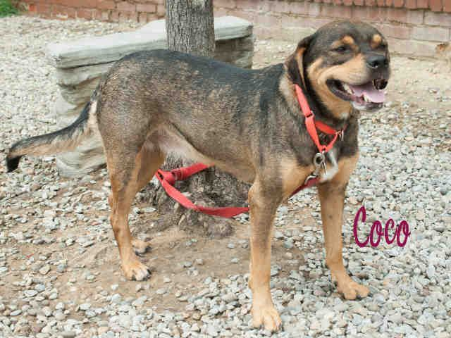 Coco Pittsburgh Pa Petharbor Com Animal Shelter Adopt A Pet