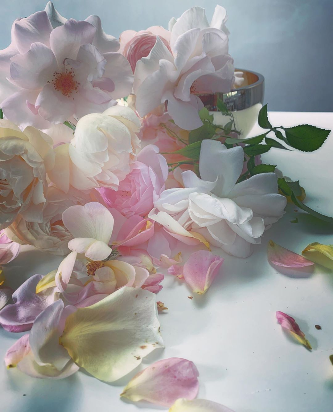"Nick Knight on Instagram ""Roses from my garden. Sunday"