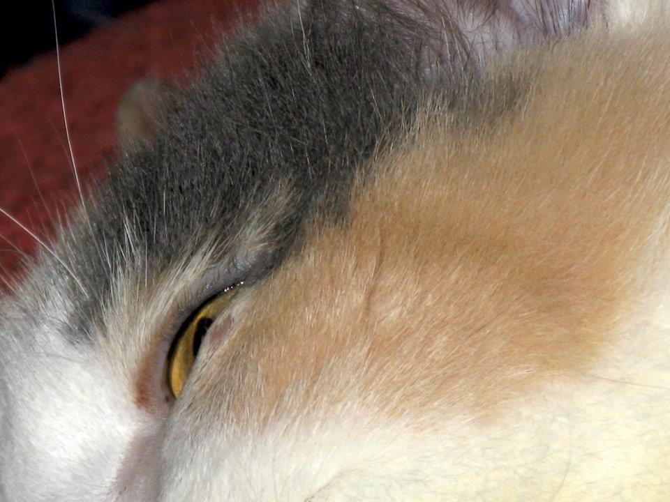 a cheek and an eye