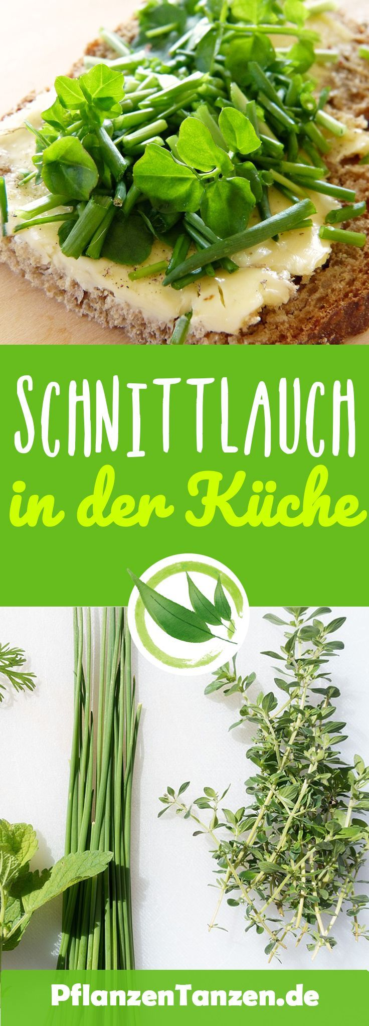 ᐅ】Komplette SCHNITTLAUCH Pflegeanleitung ✿ Perfektes Schnittlauch #kräutergartenbalkon