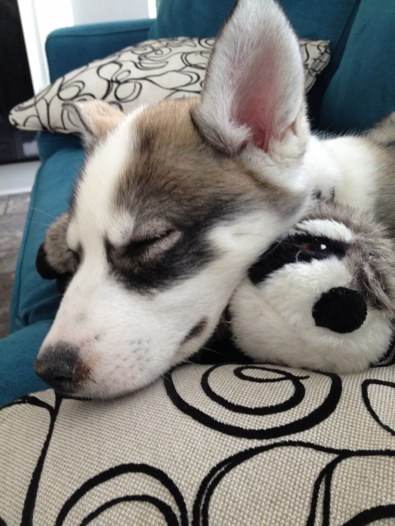 Love This Stage Siberian Huskies Snow Dogs Baby Dogs Dogs