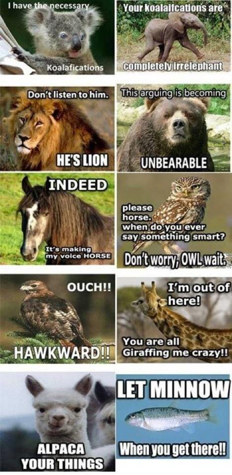 hehehe   Funny animal quotes. Animal puns. Funny animals