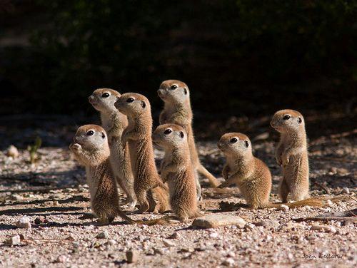 Esquilos em miniatura