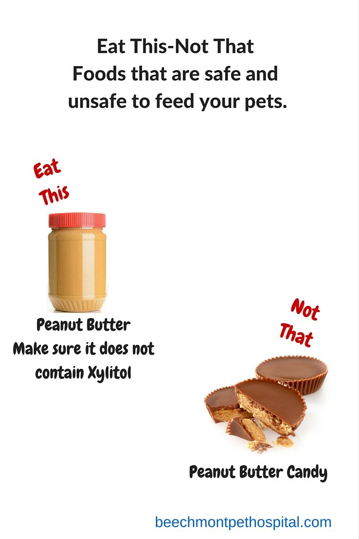 Eat This Not That Diy Dog Treats Eat Xylitol