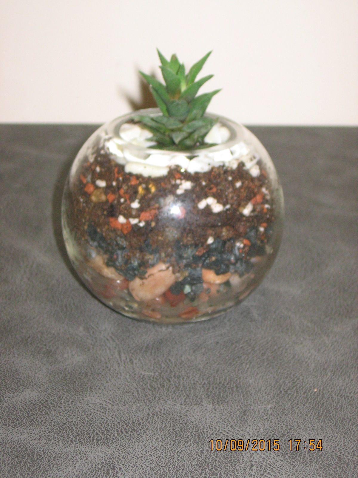 Terrarium Glass Pot Flowerpot Havortia My Diy Terrariums