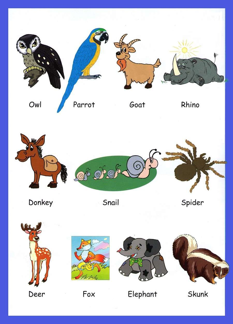 animals for kids google - Pics Of Animals For Kids