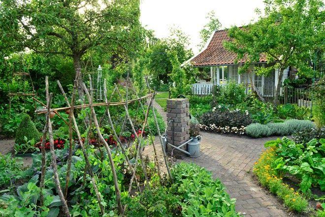 20140609 claus dalby hollandsk have kastanjehegn udend rs pinterest potager jardins et. Black Bedroom Furniture Sets. Home Design Ideas