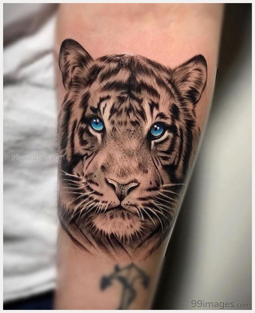 Tiger tattoo hd wallpaper download