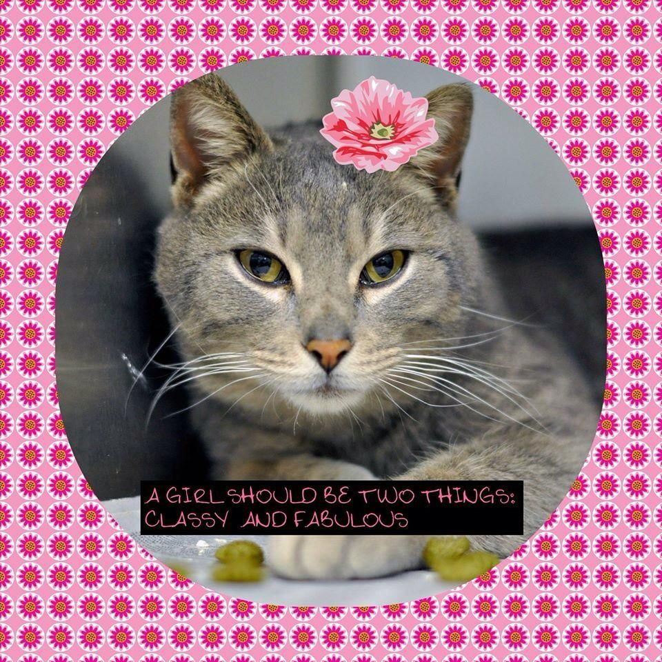 Nik & Marley Cat on Cats, Animals, Classy, fabulous