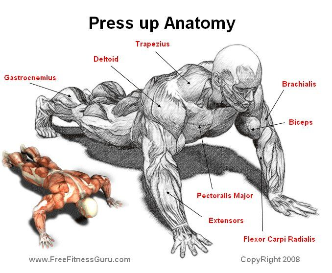 наконец, отжимания в картинках какие мышцы качаются имеют очень серьезный