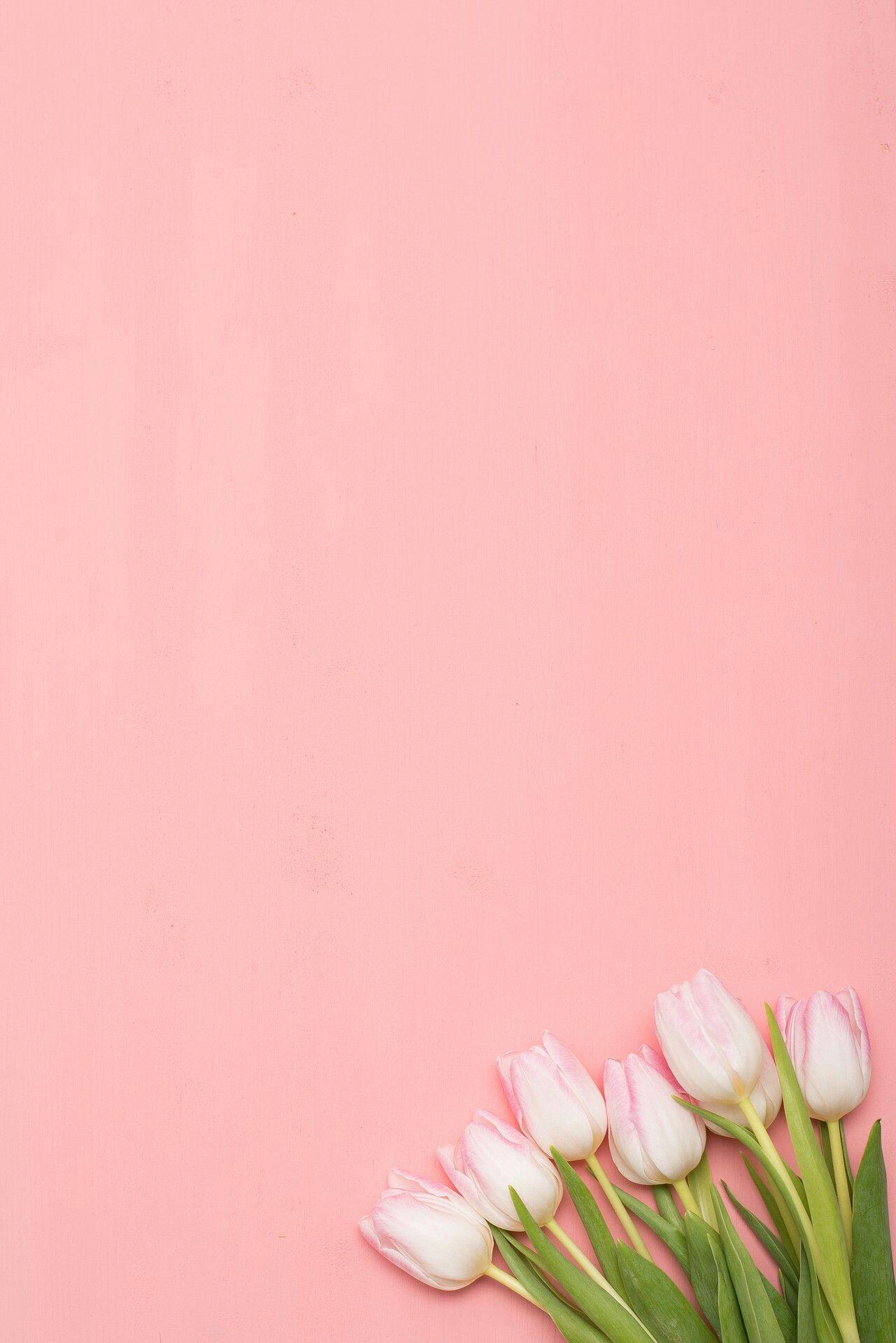 Pink Tulips Bunga Tulip Poster Bunga Wallpaper Bunga