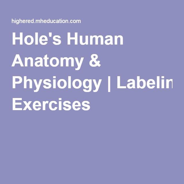 Holes Human Anatomy Physiology Labeling Exercises Dc Bio