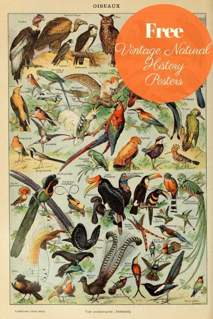 Photo of This is a fabulous free printable collection of natural history posters. More sp…