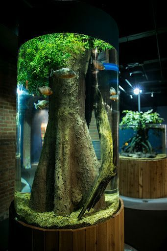 Piranha Tank (On A Smaller Scale This Would Be A Great Design Idea For The