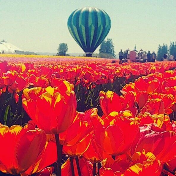 Wooden Shoe Tulip Festival, Woodburn, OR