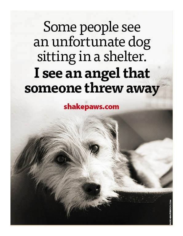 Quotes Dogs Shelter Angels Adopt Don T Shop Rescues Shelters Shakespaws Com Rescue Dog Quotes Dog Angel Dog Sitting