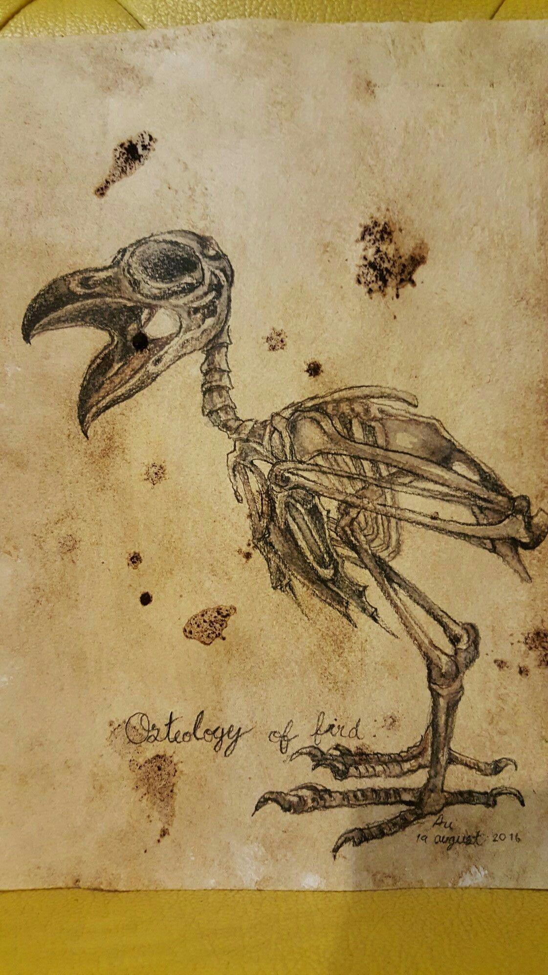 Ostology