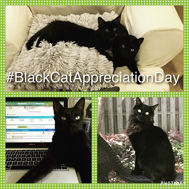 Its blackcatappreciationday ! One black cat fact is that