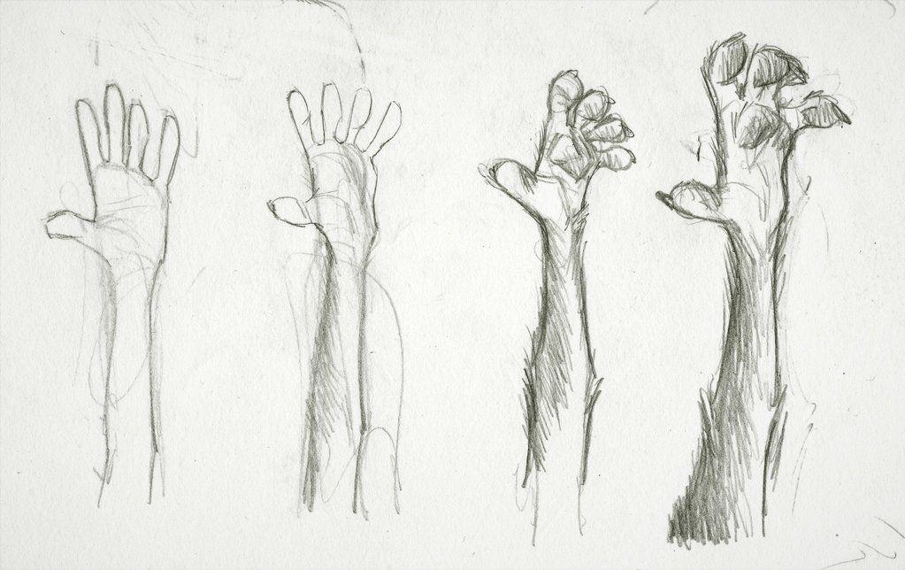 Werewoof Hand by MonoFlax deviantart com on @DeviantArt