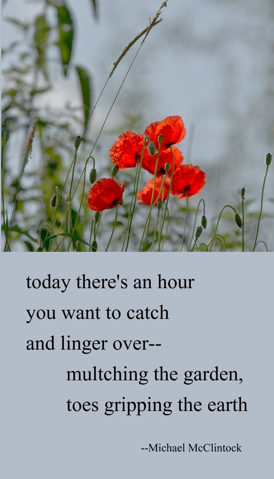 Tanka poem todays there's an hour by Michael