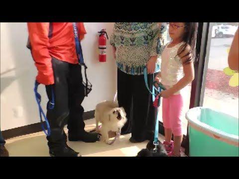 Dogs Fear Biting Fix In Minutes Dog Seminar Dog Whisperer Big